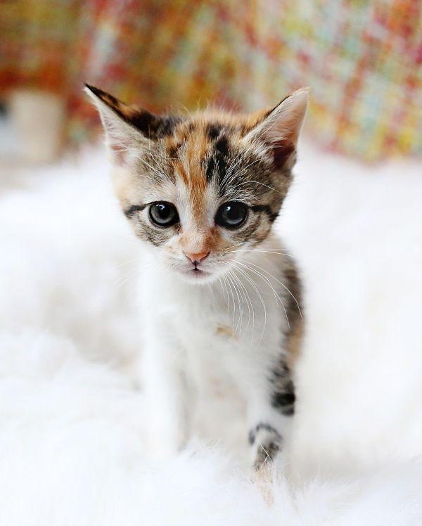 Gatito Kawaii bebe