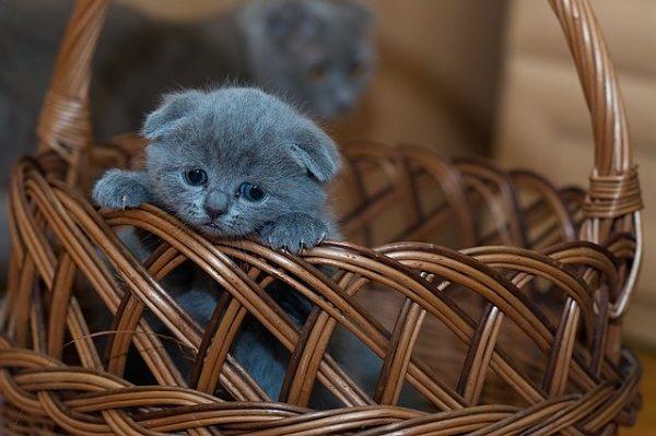 Gato Kawaii adorable